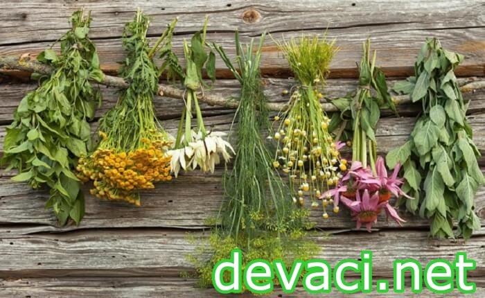 bahcede-yetisen-sifali-bitkiler